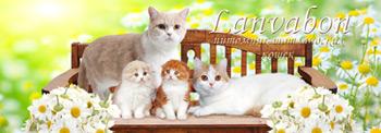 питомник для кошек.